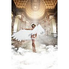 Back in Heaven Чулки белые с задним швомOS (42-46)  Чувственно и нежно подчеркивают Ваш шарм эти белые прозрачные чулки.